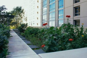 The organic gardens on the rooftop of AMLI River North in Chicago.