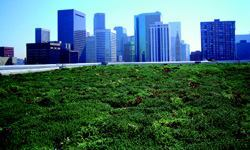 Green roofs are popping up across the country on various types of buildings, including  the new U.S. EPA headquarters building in Denver, shown here. Native  plants typically are planted; they reduce stormwater runoff and reduce  the urban heat island. Photos: Green Grid Green Roofs