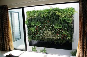 VHedge by Earthia features a modular interlocking frame assembly constructed from noncorrosive materials that are 100% recyclable. The vertical green-wall system provides 36 plants per square meter in 1- and 1/2-square-meter modular combinations. Precision irrigation through individual emitters allows each plant to receive the correct amount of water.