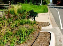 This rain garden in Plymouth, Minn., accepts stormwater runoff from the adjoining roadway.