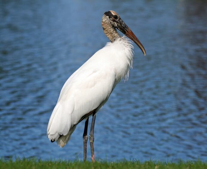 Florida Home Builders Get Federal Government to Reconsider an Endangered Species