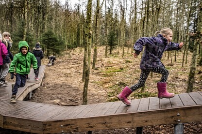 Wonder Wood Playground