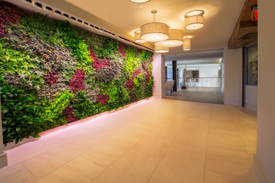 The Living Green Wall at Fuse Cambridge, which includes various plants with health and sustainability benefits.