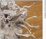 """Synthetic """"structural"""" fibers in concrete."""