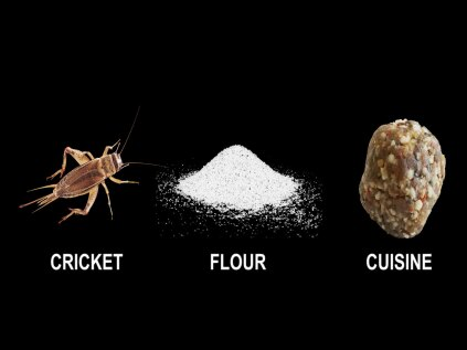 Cricket flour is a source rich with proteins and amino acids.
