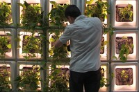 CASE Puts Its Green Wall System to the Test