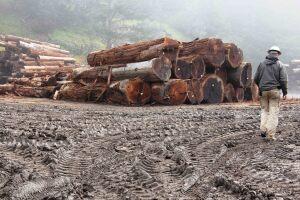 Big Creek Lumber log storage yard