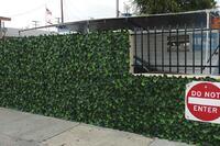 Anti-grafitti ivy