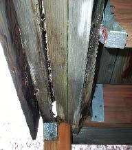 Figure 4. Moisture trapped between its members has rotted this beam, which is at risk for imminent collapse.