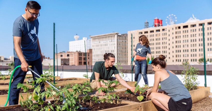 Urban Farmer Plows a Rooftop for Revitalization in St. Louis