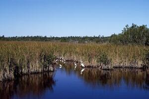 Three Steps to Streamlining Environmental Permits