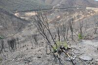 Post-wildfire erosion: After the fire