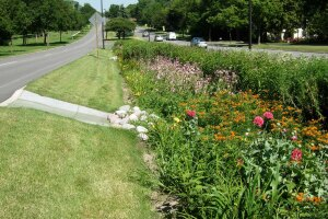 Raingardens slow stormwater as it travels downhill, giving it more time to infiltrate the soil.