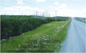 Controlling erosion with hydraulic growth mediums