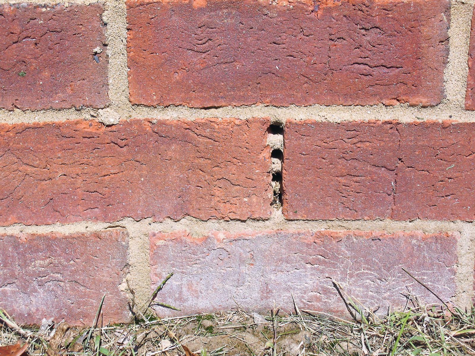 Adding Weep Holesmasonry Construction Brick
