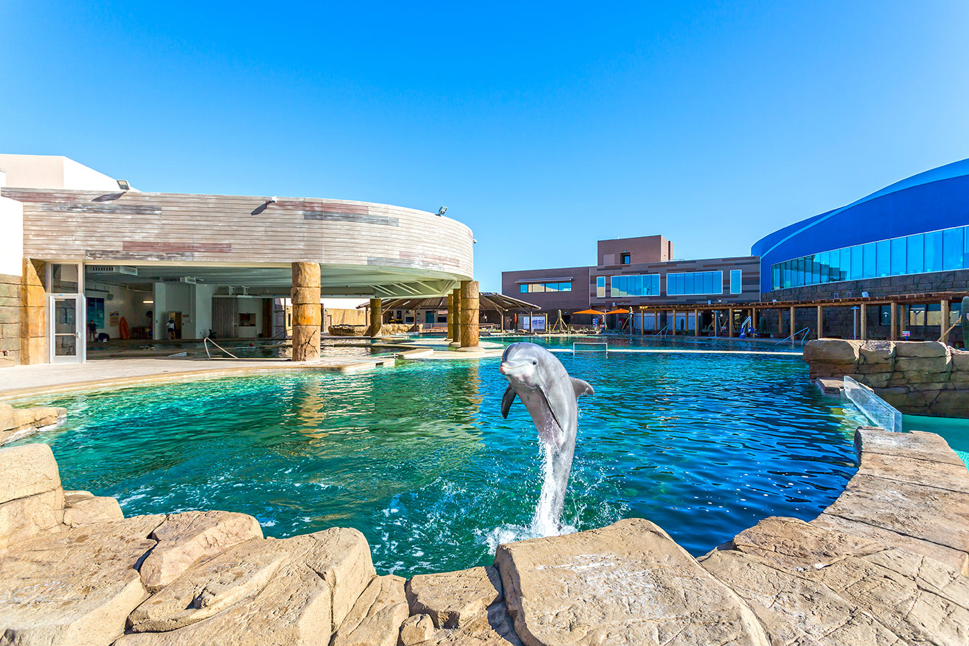 People and Dolphins Can Swim in This Pool- Aquatics ...