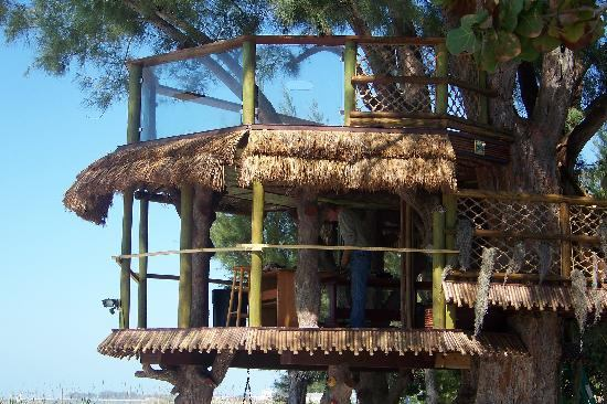 On A Florida Beach A Tree House Crosses The Line Jlc Online