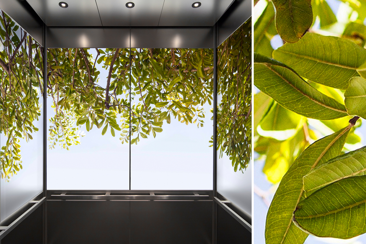 bringing the beauty of nature into interior spaces