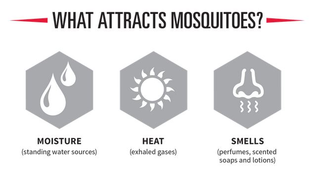The Worst Cities For Mosquitoes