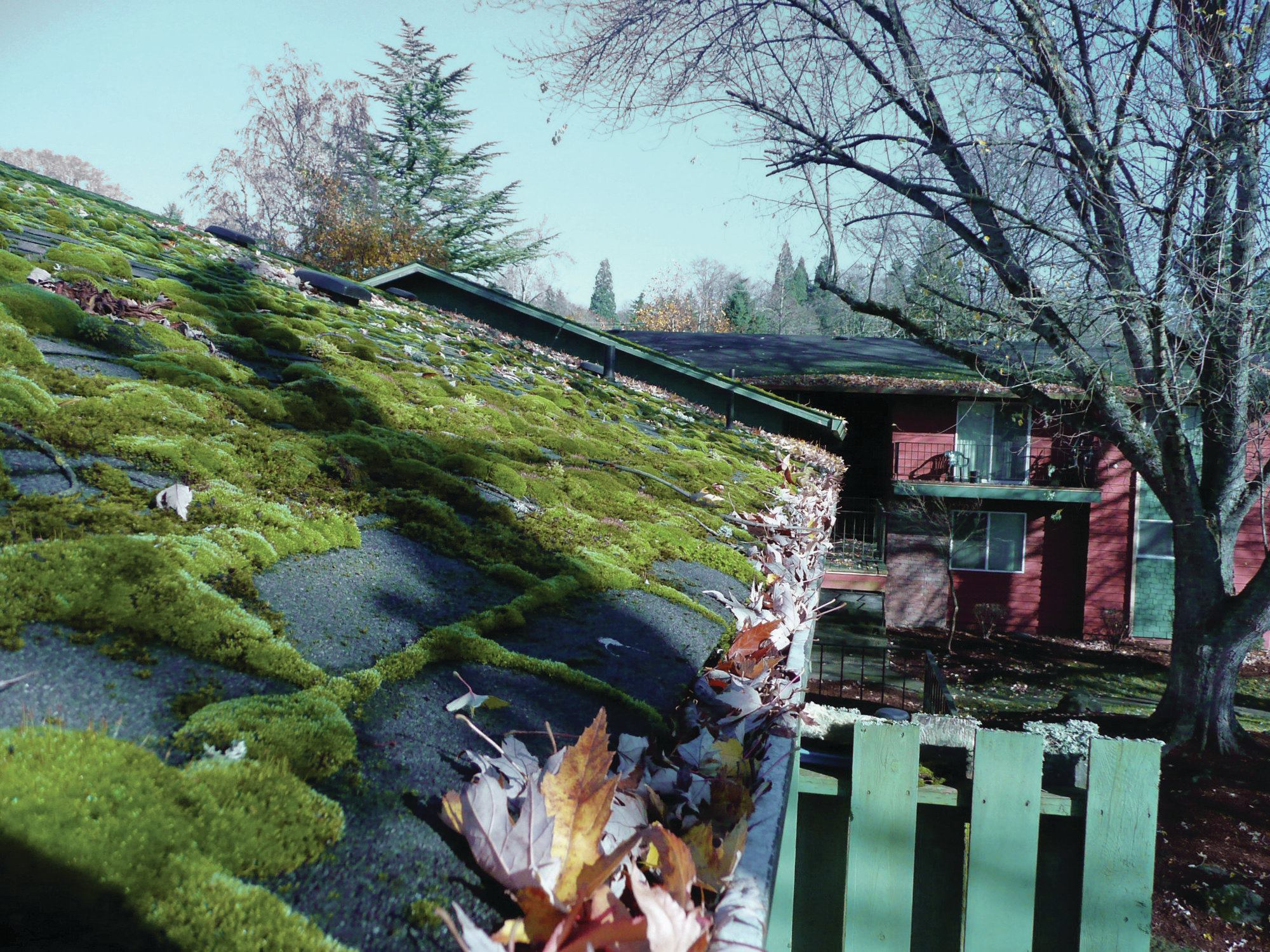 Damage From Roof Moss Jlc Online Roofing Mold