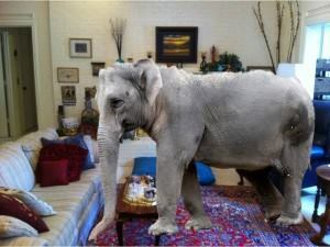 if you were to walk into an engineers office and tell him to reduce the reinforcing steel in a structure or to cut back on the design strength he would - The Elephant In The Living Room