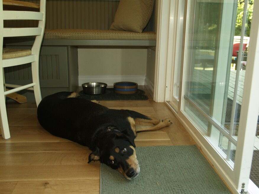 Pet Friendly Remodeling Entries And Honorable Mentions