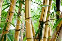 改良竹子和钢筋的替代品?
