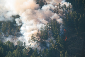 Why Some Home Prices Rebound Quickly After a Forest Fire