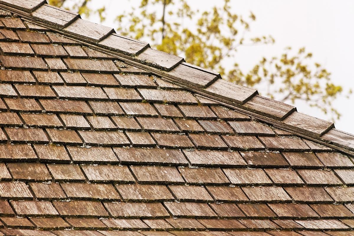 Moss On Cedar Shingles Jlc Online